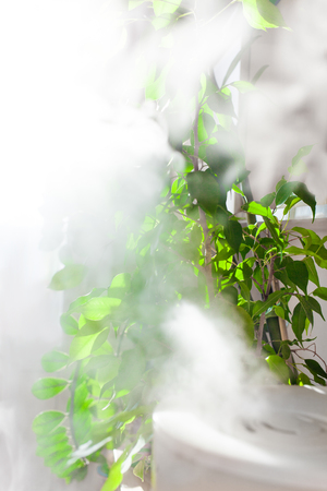 Vapor from humidifier near houseplants  Фото со стока