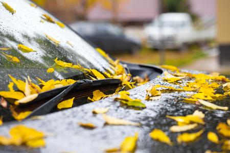 Yellow fallen leaves on black car hood. Rain drops Standard-Bild - 110545554