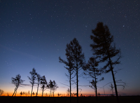 Autumn larches under starry sky at sunrise. Khabarovsky region, Russia. Standard-Bild - 110545638