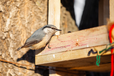 Nuthatch at wooden bird feeder Фото со стока
