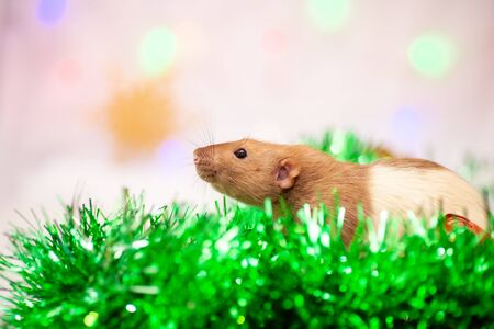 Topo seduto alle decorazioni natalizie verdi