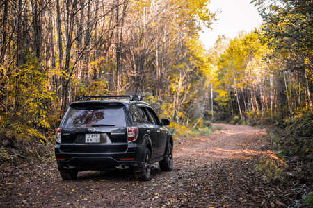 Khabarovsk Russia - September 27, 2020: Subaru Forester moving on the road in autumn forest