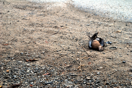 Birds that died on the side of the road caused by a car crash 版權商用圖片