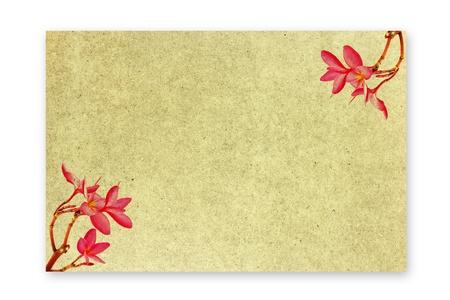 convolvulus: Frangipani flower patterned paper Stock Photo