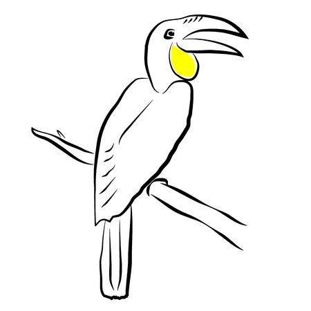 Bird Hornbill Stock Vector - 15781085