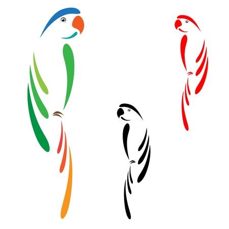 pappagallo: Pappagallo Vettoriali