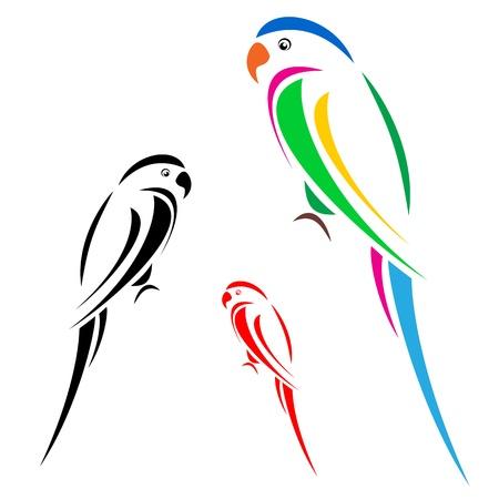 amerika papağanı: Papağan