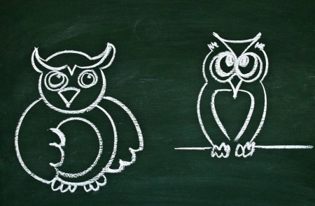 Drawing of the owl on a school blackboard photo