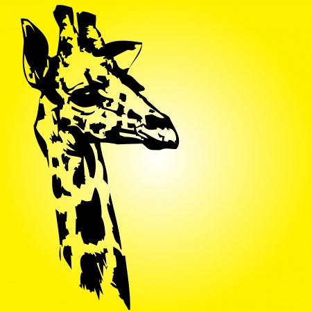long neck: Head of a giraffe on yellow background
