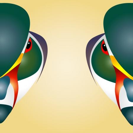 anatidae: Head of mandarin duck beautifully designed half   Illustration