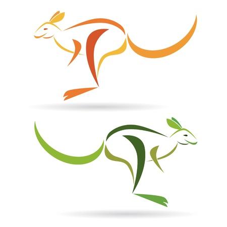 kangaroo white: Vector image of an kangaroo on a white background