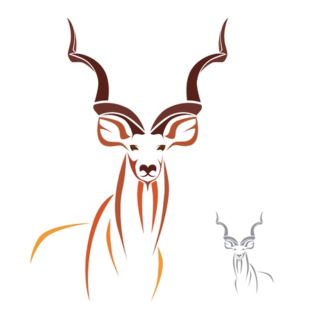 Greater Kudu has the longest horns in the world Vector