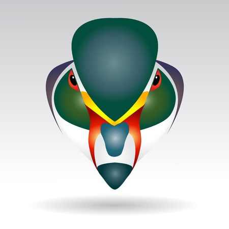 anatidae: Head of Mandarin Duck beautifully designed half - vector