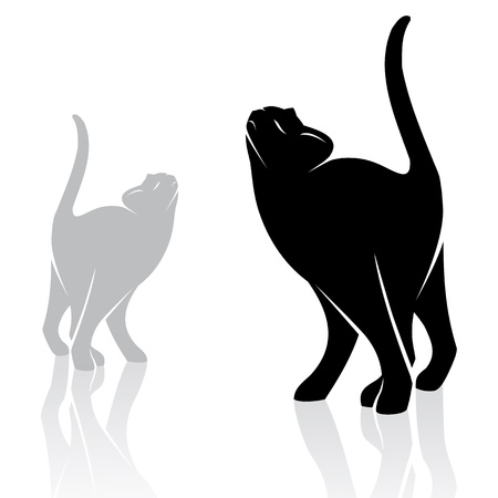 walking on hands: image of an cat on white background