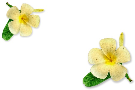 convolvulus: Frangipani flower made from recycled wood