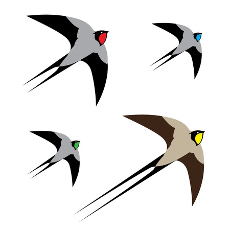 Vector image of an hirondelle on white background Stock Vector - 16904938