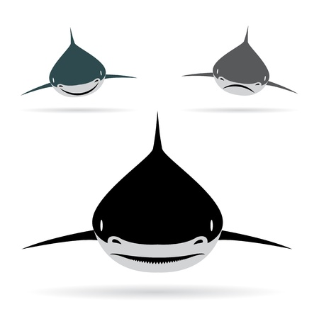 Vector illustration of shark  on white background Stock Vector - 16904937