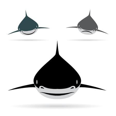 fins: Vector illustration of shark  on white background
