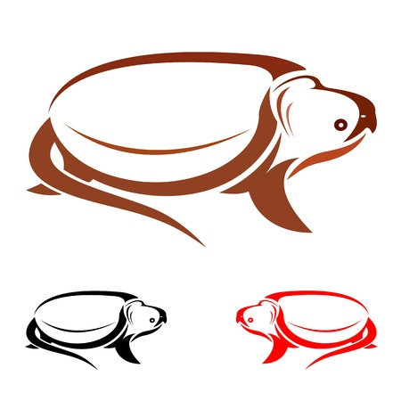 Vector de imagen de una tortuga en el fondo blanco