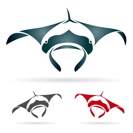 stingray: Vector image of an stingray on white background