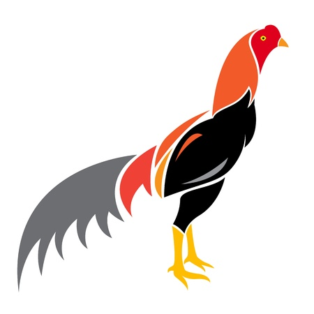 poultry farming: Vector image of an cock on white background