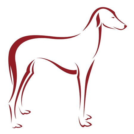 an dog  on white background  Vector