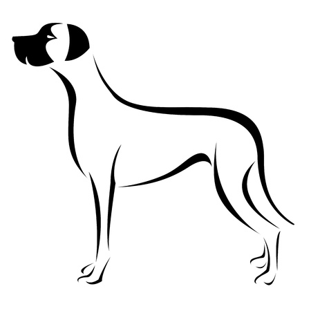 dog outline: an dog  great dane  on white background