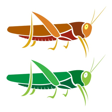 grasshopper on white background Vector