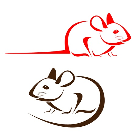 rodent:  rat on a white background Illustration