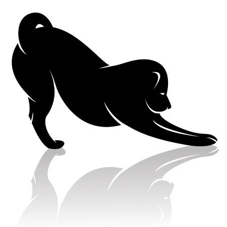 black labrador:  dog on white background