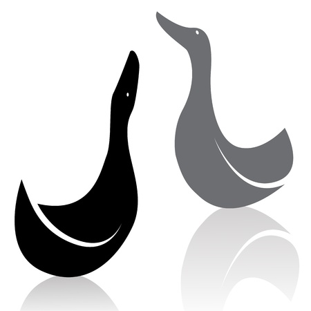 waterfowl: image of an duck on white background  Illustration