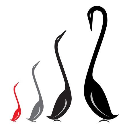cisnes: imagen de un grupo de cisnes en un fondo blanco. Vectores