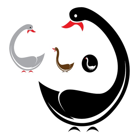 Vector image of an swans on white background  Vector