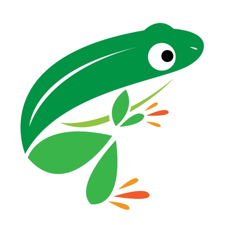 animals amphibious: image of an frog on a white background