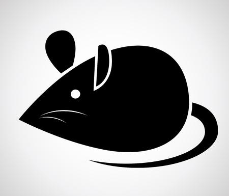 rodents:  image of an rat on a white background