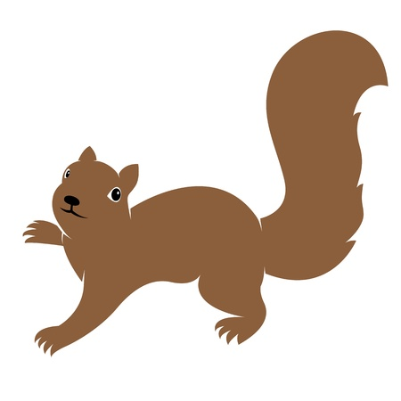 isolated squirrel: Vector image of an squirrel on white background