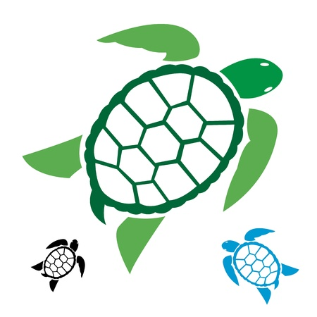 image of an turtle on white background  Vector