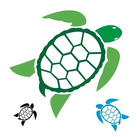 tortuga: imagen de una tortuga en el fondo blanco