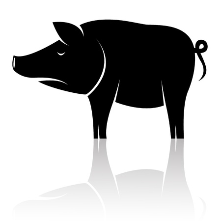 bloated: image of an pig on white background