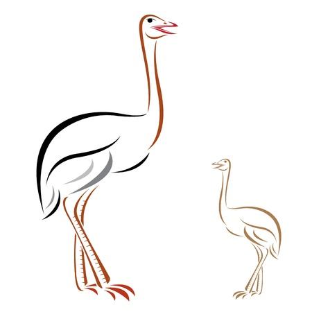 emu: Imagen vectorial de un avestruz en el fondo blanco
