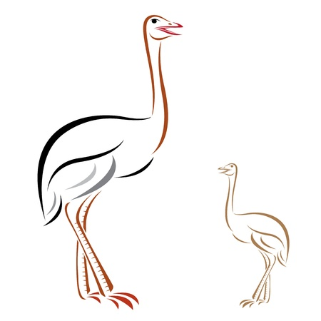 rhea: Vector image of an ostrich on white background Illustration