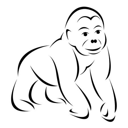 gorila: Vector image of an gorilla  on white background