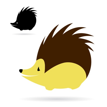 hedgehog: image of an porcupine on white background
