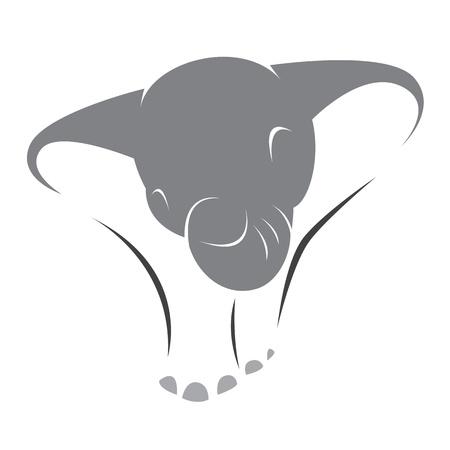 asian elephant:  image of an elephant on a white background