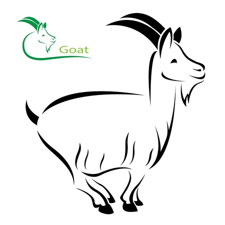 domestic goat:  image of an goat on white background