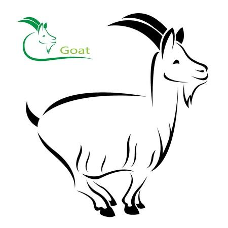 macho cabrio: imagen de una cabra en fondo blanco Vectores