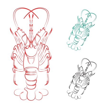haut:  image of an lobster on white background  Illustration