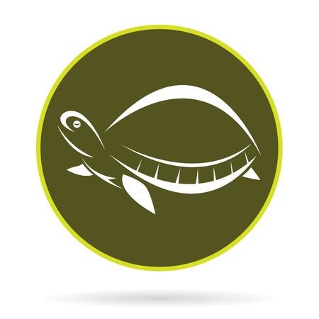 imagen de una tortuga, ilustraci�n