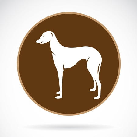 image of an dog (azawakh) , illustration Vector