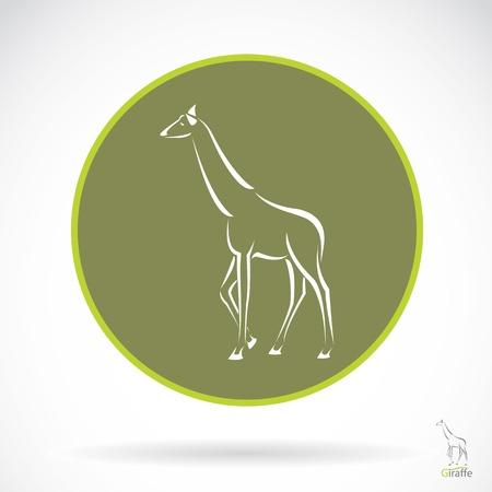giraffa: Vector de imagen de una jirafa, ilustraci�n